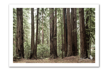 Redwood Grove_Website.jpg