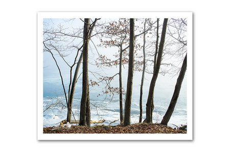 CT River_Ice-Trees.jpg