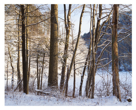 "#26 ""Winter Morning""