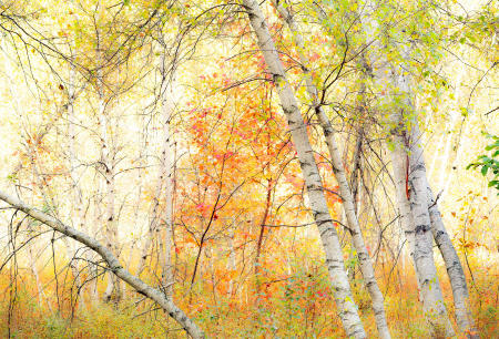 AutumnBrilliance_WhiteBirch_WhtMnts_2015-10-05_0483_WebOpt.jpg