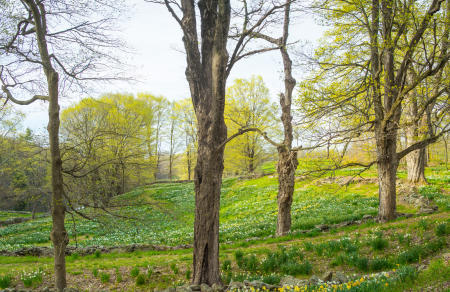CT_Ltchfld_LaurelRidge_2017April29_823-Pano.jpg